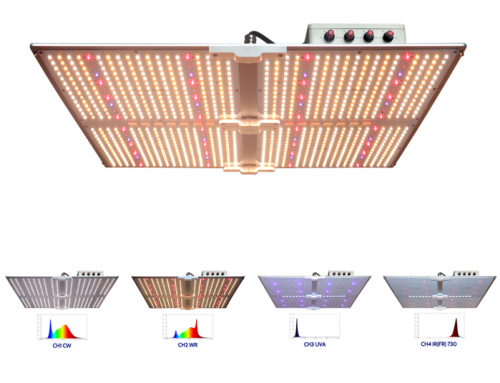"Use ""Horti Guru"" plant grow light control system and G550-4H four-channel plant light to grow medicinal cannabis plants"