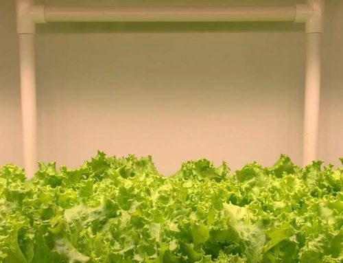 G45 series of plant lights are high-efficiency plant lights designed for indoor vegetable and ornamental plants