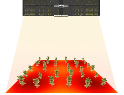 How to improve the uniformity of plant LED grow light – the plant light LED quantum board