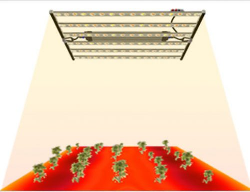 The importance of PPFD uniformity of plant lights-High light uniformity LED plant grow lights
