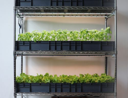 Do it yourself DIY chrome-plated steel wire frame indoor hydroponic vegetable planting system