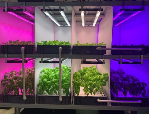 Plant light comparison test of plant light 5-hydroponic vegetable